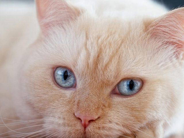 Белая кошка лежит на полу кошка