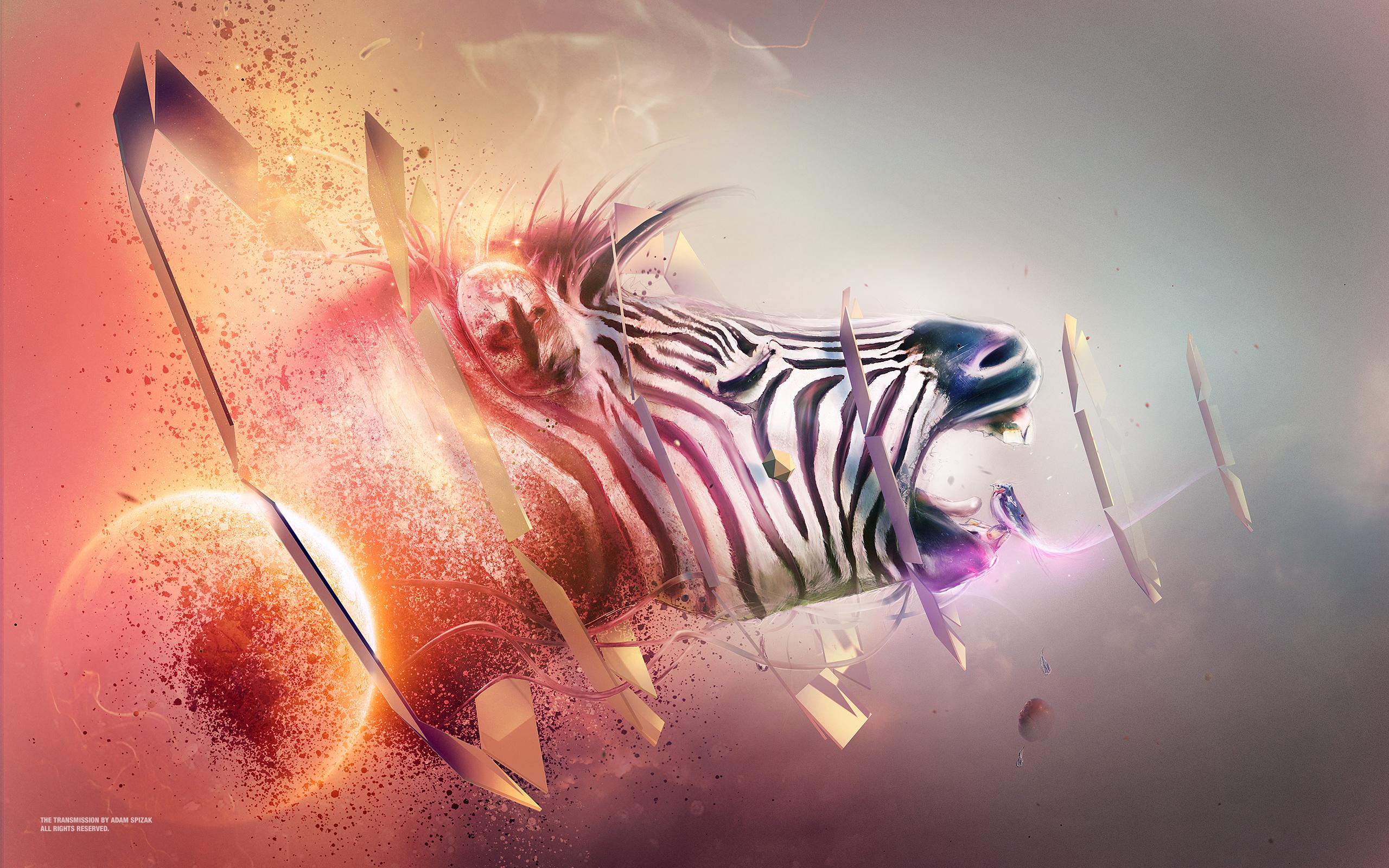 Переход зебры обои скачать