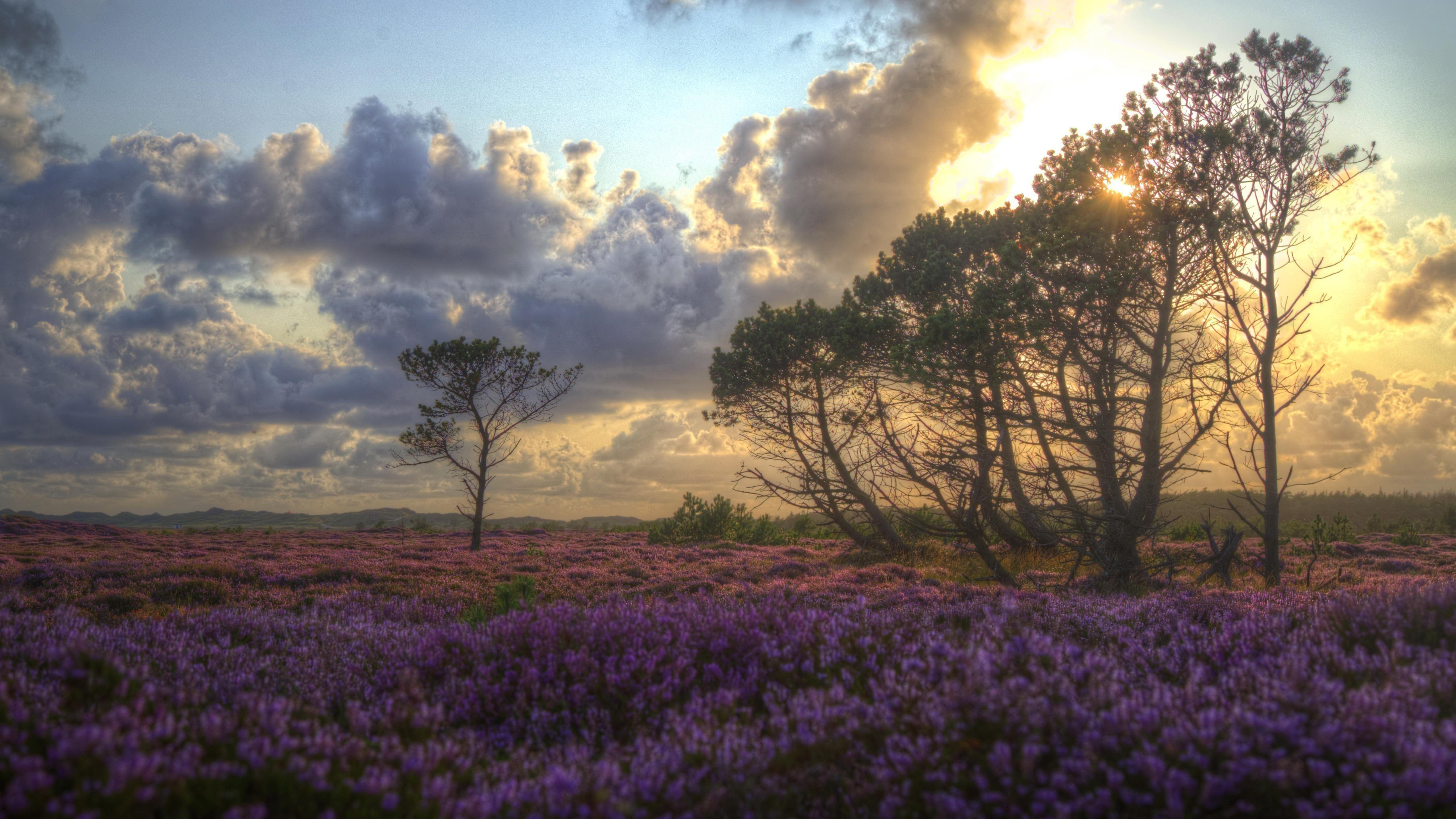 Солнце проходит сквозь зеленые деревья под пурпурным полем с облаками природа обои скачать