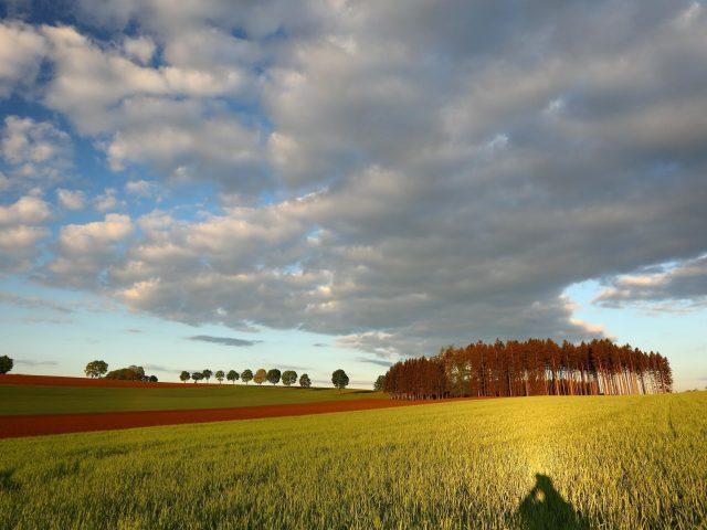 Деревья облака небо
