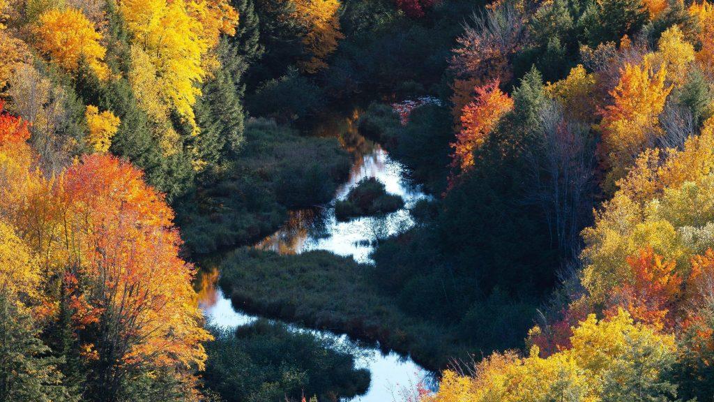 Прекрасный вид с высоты птичьего полета на лесную природу обои скачать