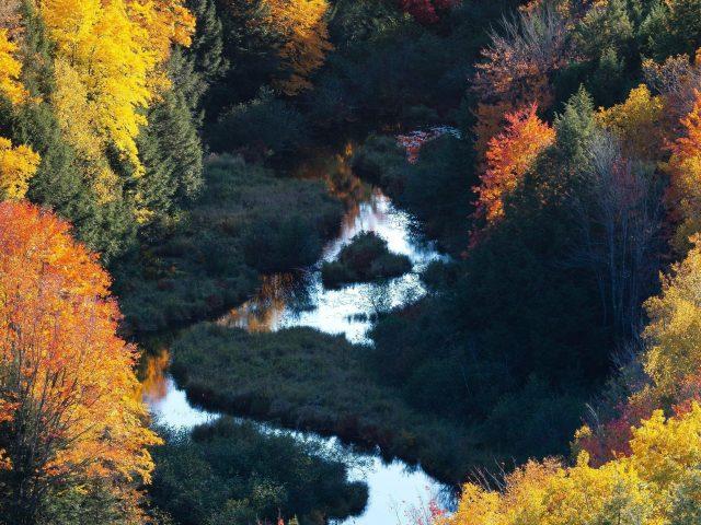 Прекрасный вид с высоты птичьего полета на лесную природу