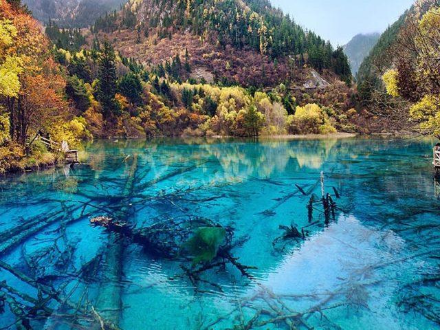 Пейзажный вид красочных осенних листьев деревьев отражение на реке в дневное время природа
