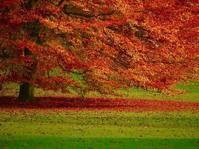 Желто-красная осень осенние листья ветви деревьев зеленая трава поле осень