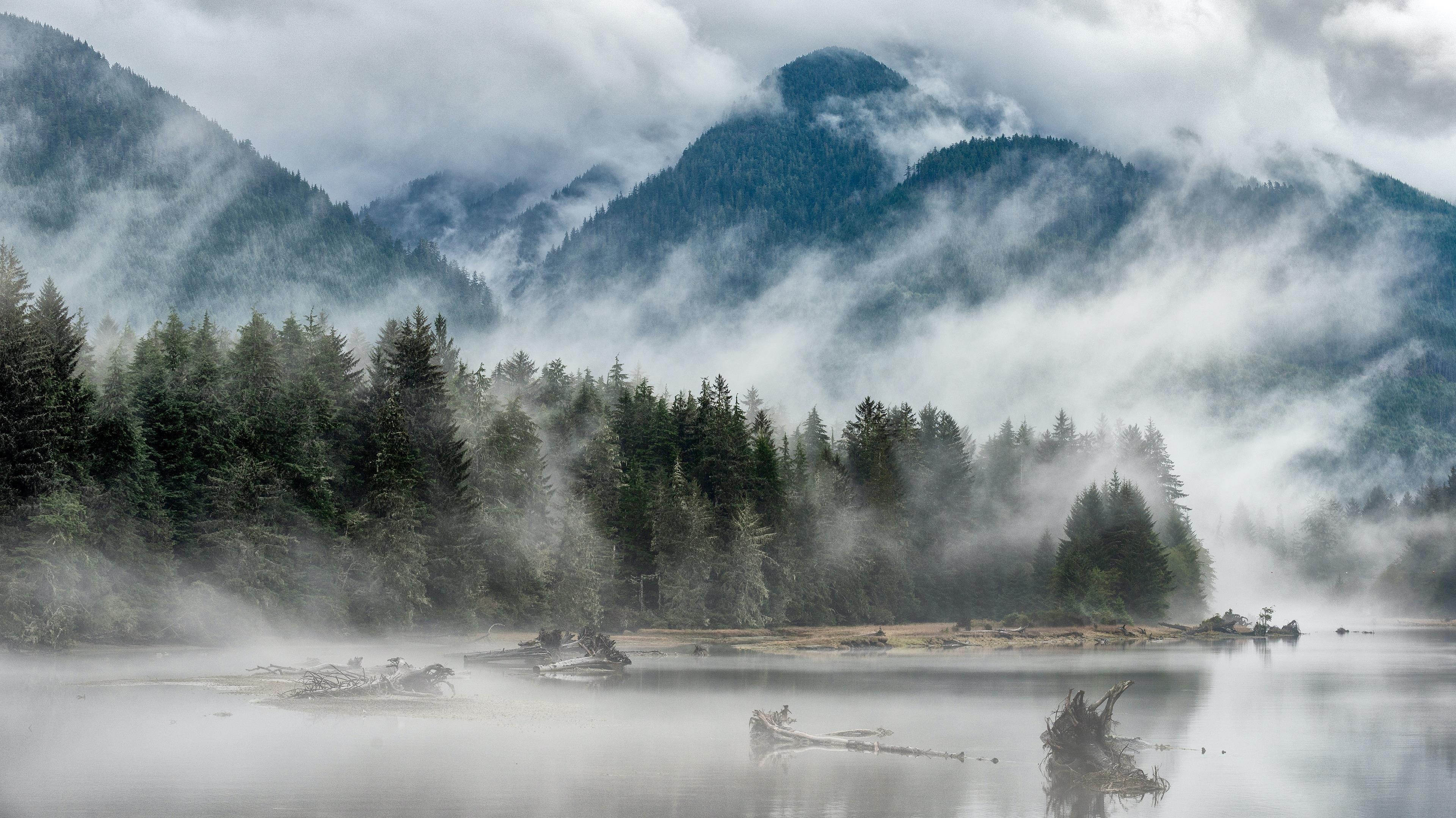 Туман горы деревья река обои скачать