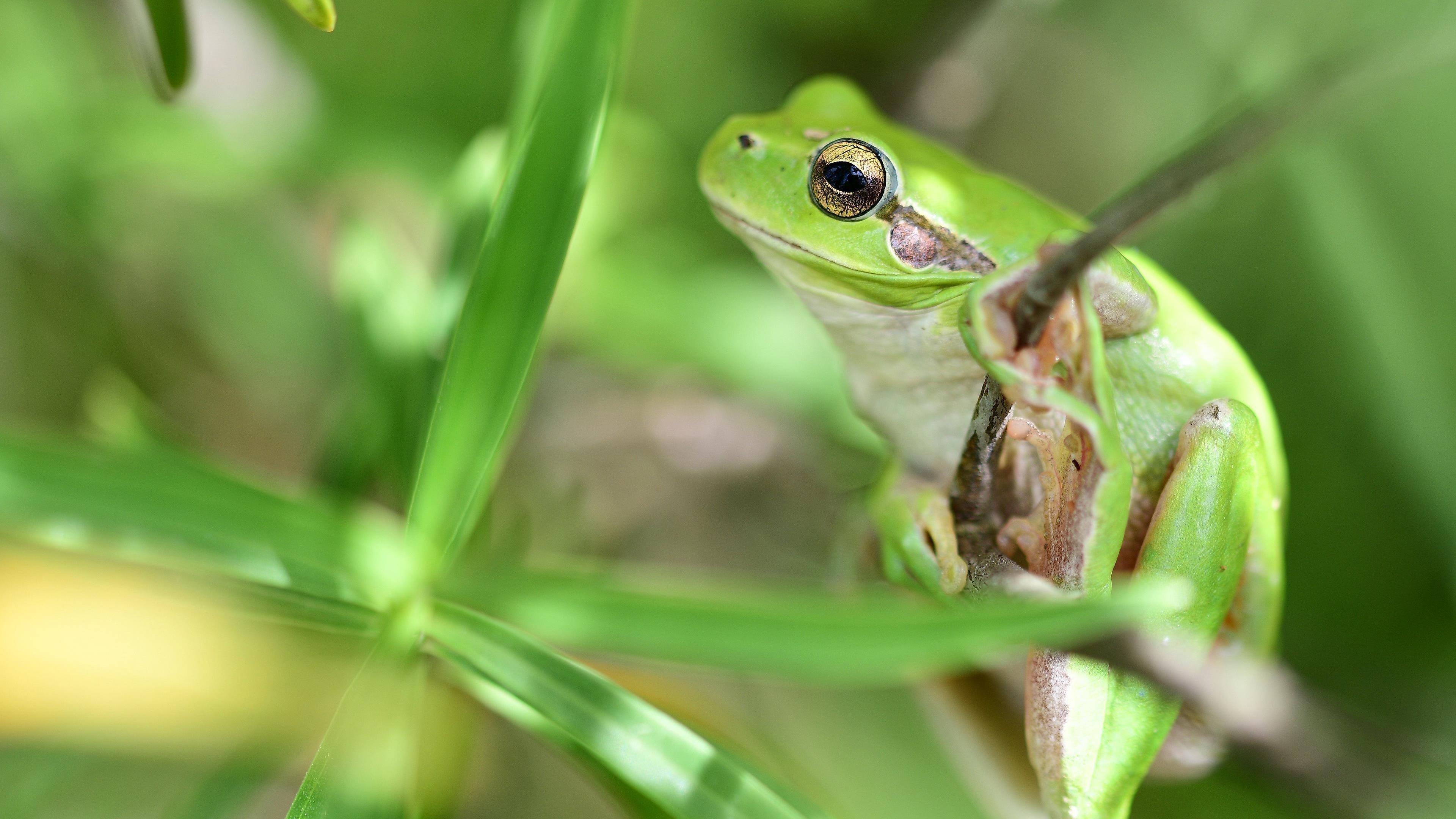 Животное лягушка обои скачать
