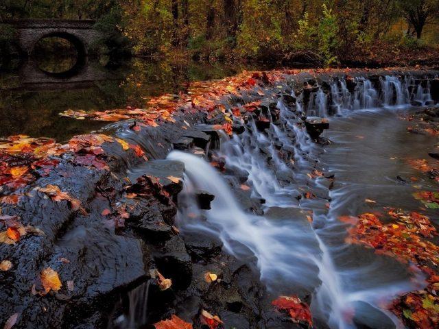 Водопад и листва деревья в лесу и мост во время осенней природы