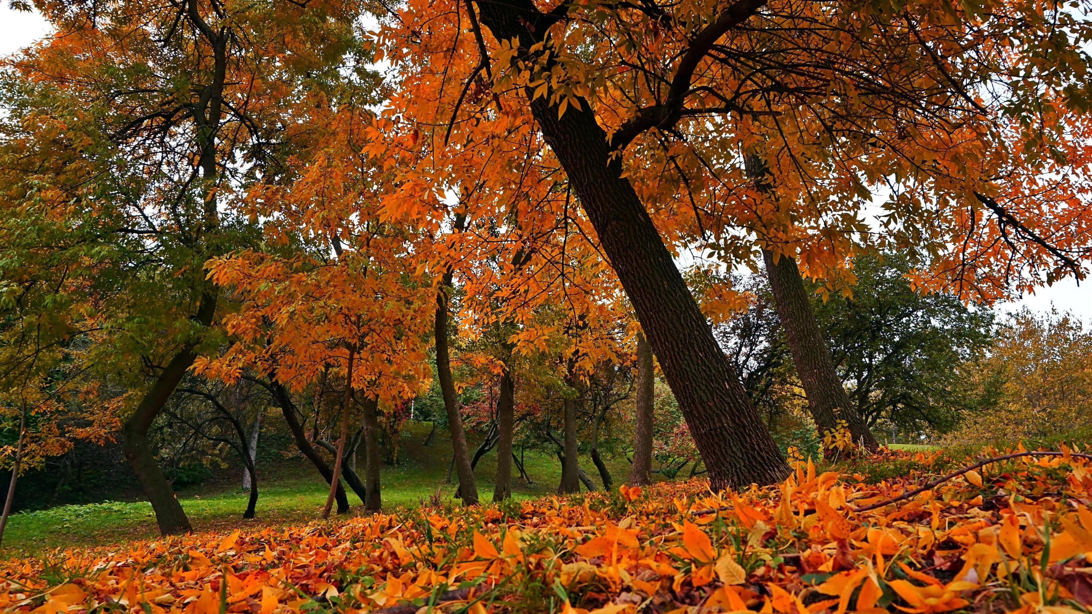 Оранжевые сухие листья на земле упавшие с деревьев в лесной природе обои скачать
