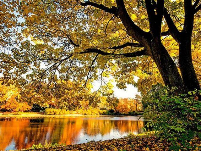 Желто-зеленая осень осенние деревья листья отражение на реке в дневное осеннее время