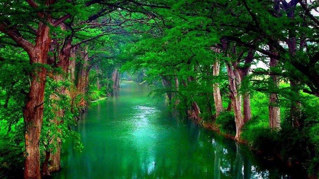 Река между зелеными деревьями и растениями природа обои скачать
