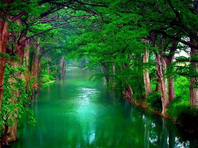 Река между зелеными деревьями и растениями природа