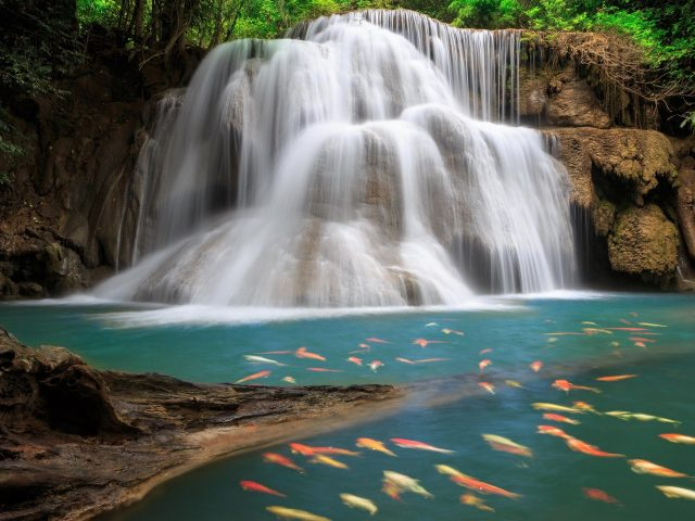Водопад между скал в окружении зеленых лиственных деревьев и рыб на водоеме природа