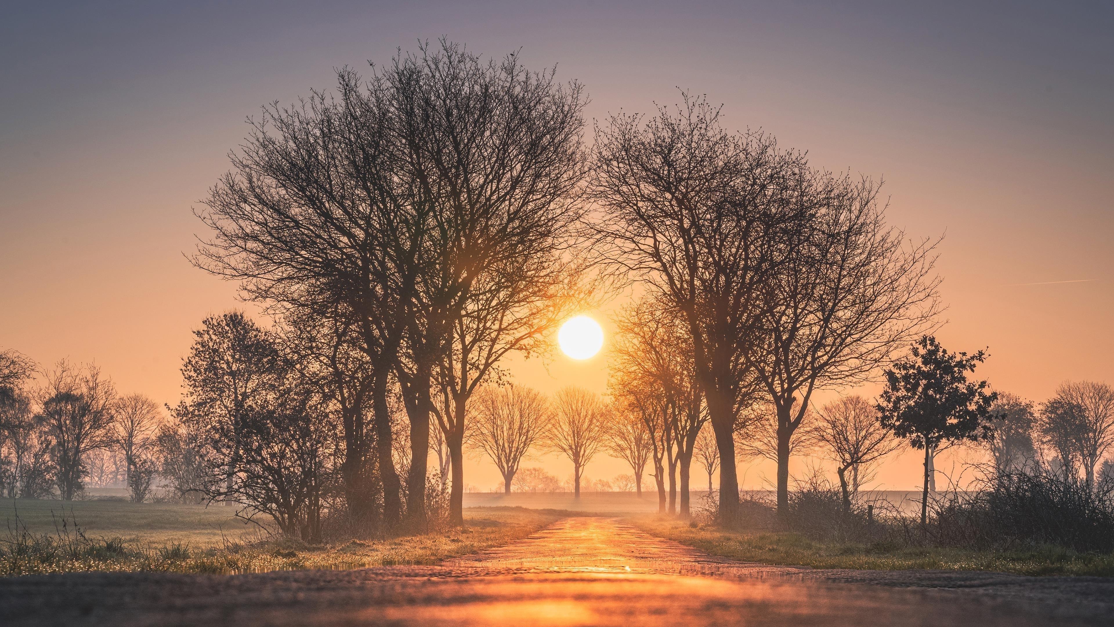 Рассветы и закаты деревья солнце туман обои скачать