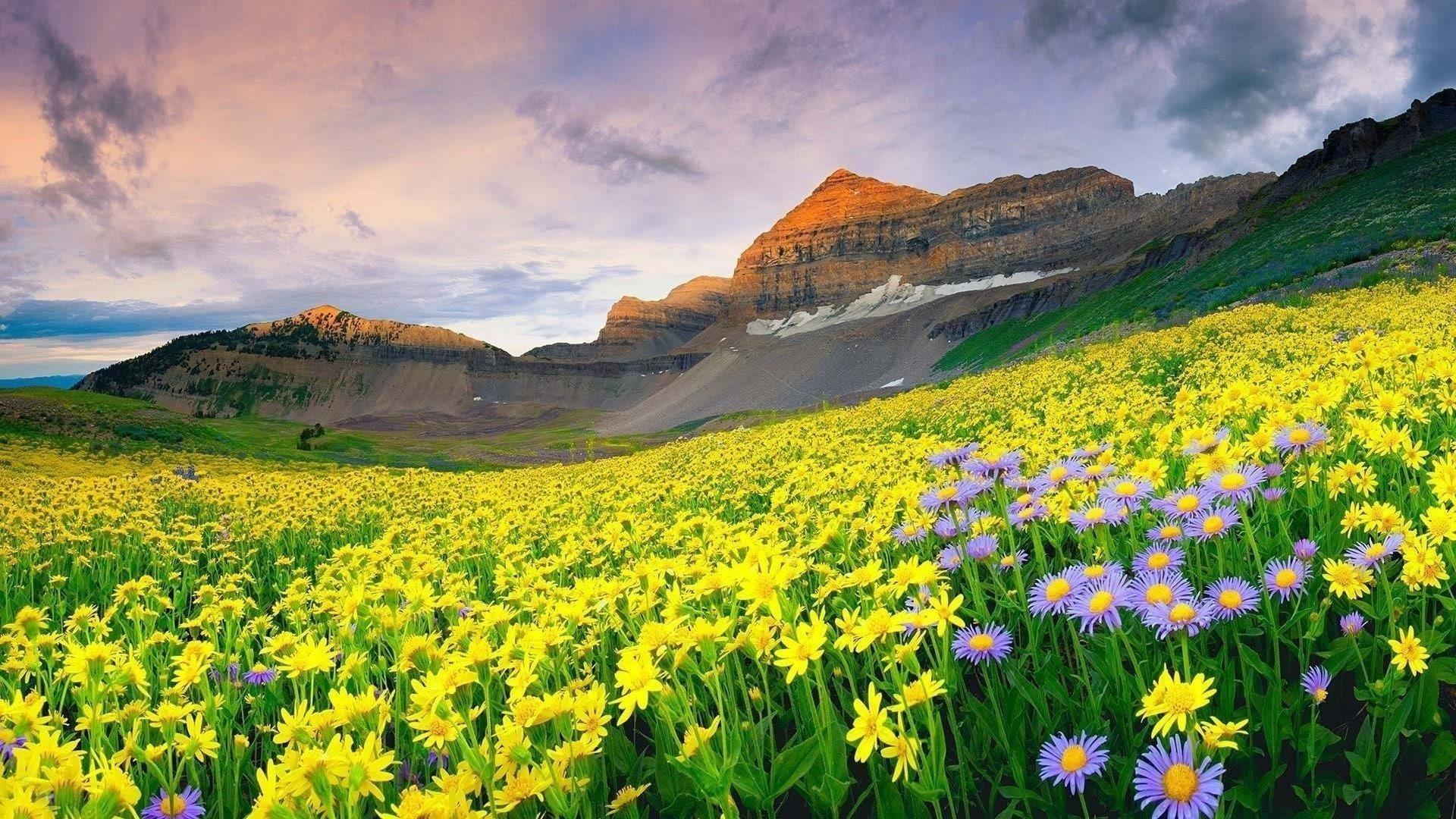 Пейзаж вид желтых покрытых гор под белым облачным небом и крупным планом вид желтых цветов полевой природы обои скачать