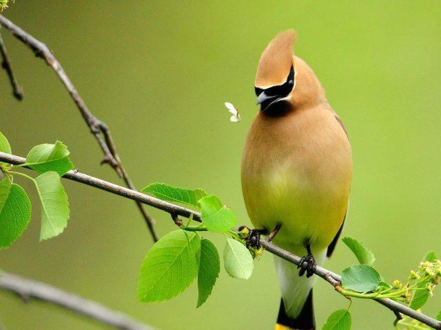 Светло оранжевая черная птица стоит на стебле растения в размытом зеленом фоне птицы