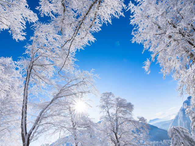 Белые цветущие деревья и Альпы Австрия морозная гора под голубым небом в дневное время природа