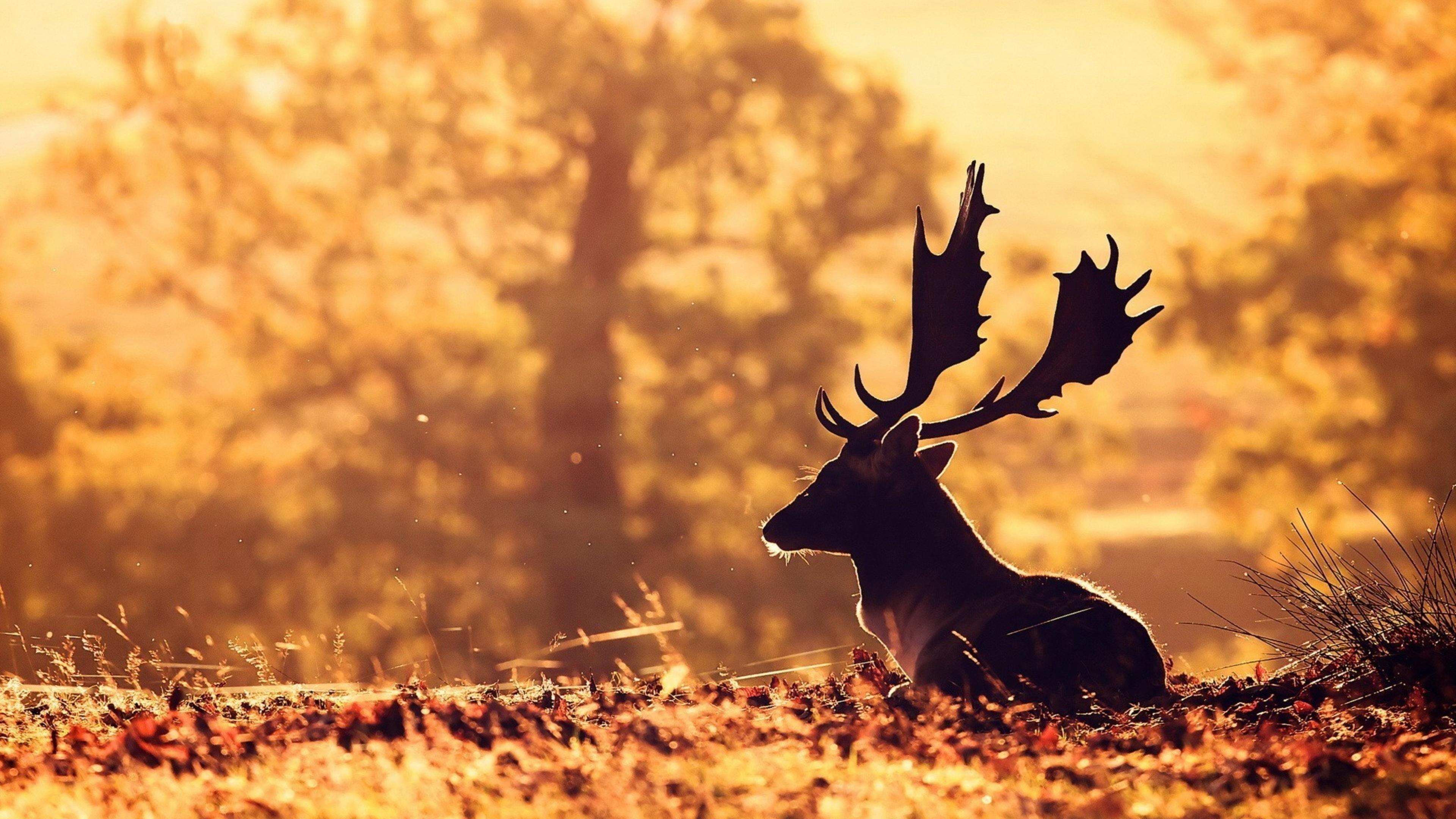 Олень, лес, размытость обои скачать