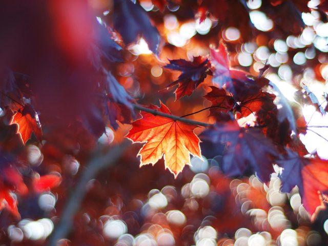 Красочные осенние листья деревьев с солнечным лучом в размытом фоне природы