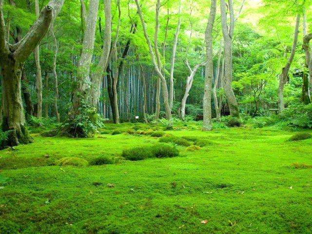 Красивый зеленый травянистый лес с лиственными деревьями в дневное время природа