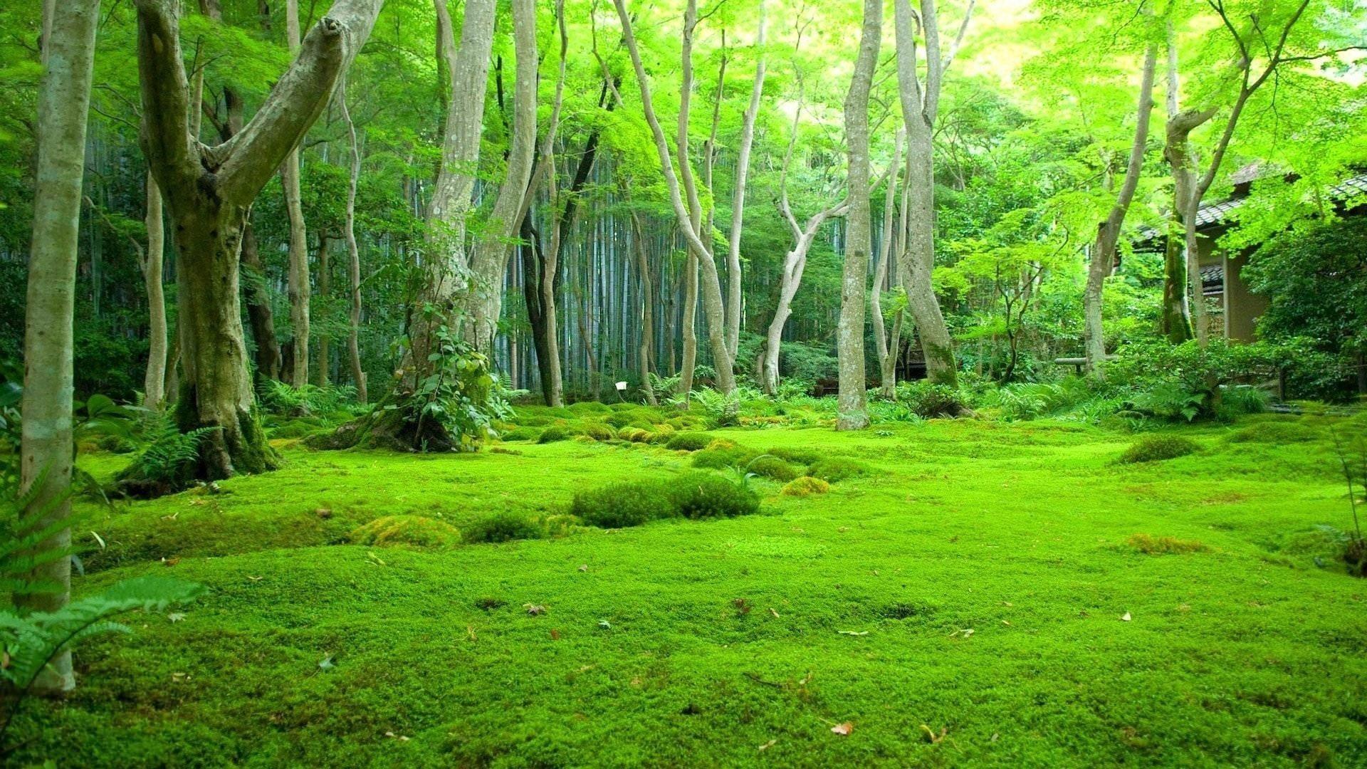 Красивый зеленый травянистый лес с лиственными деревьями в дневное время природа обои скачать