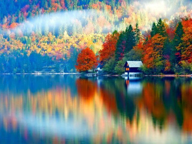 Красочные цветущие деревья вокруг спокойного водоема с отражением дневной природы