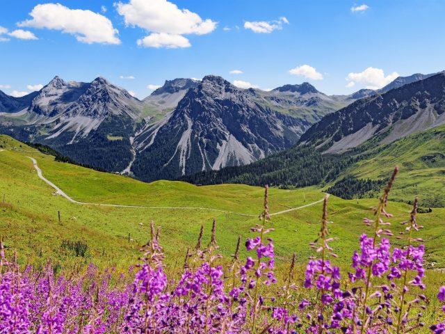 Горы вершины полевые цветы пейзаж природа