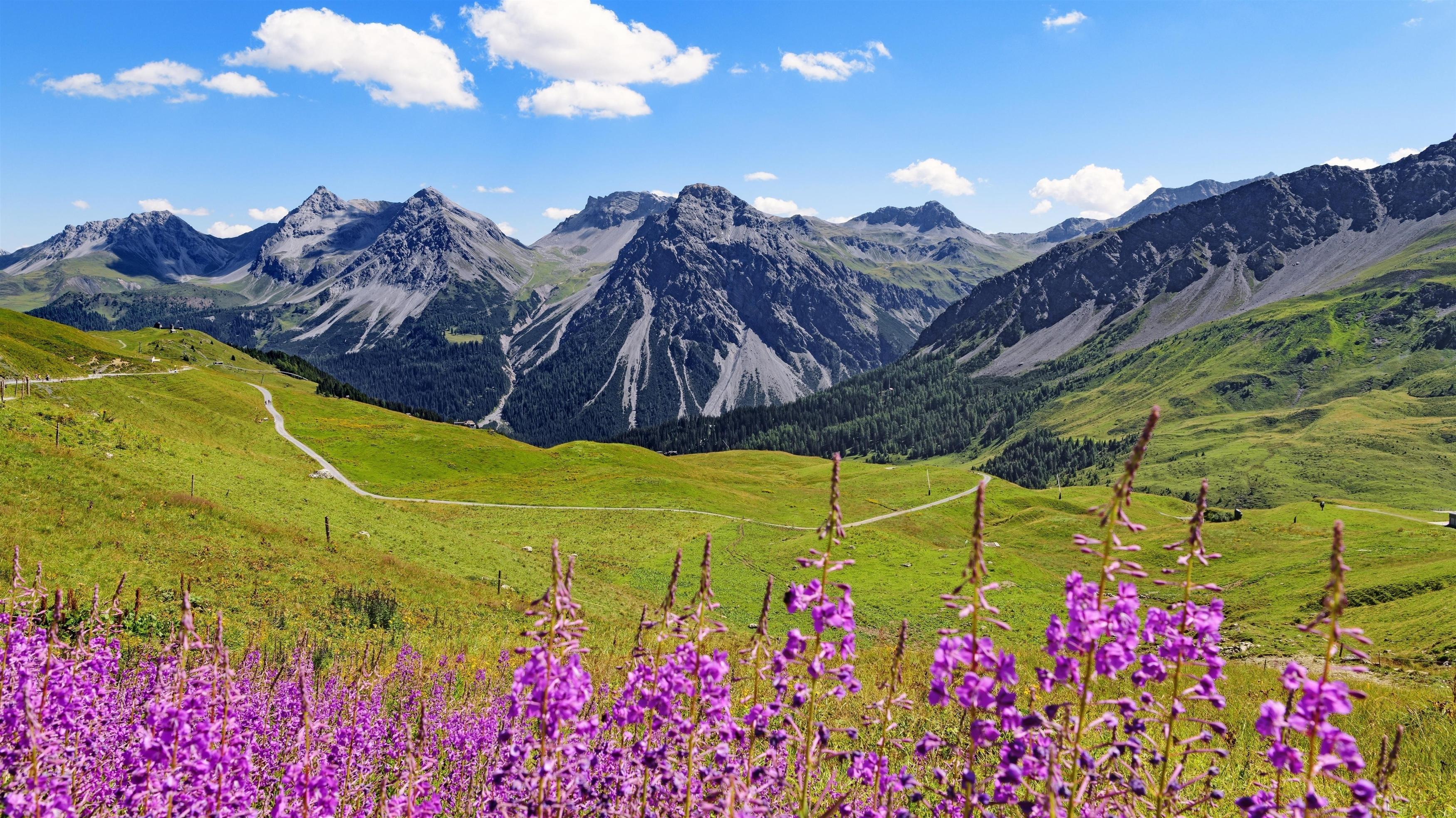 Горы вершины полевые цветы пейзаж природа обои скачать