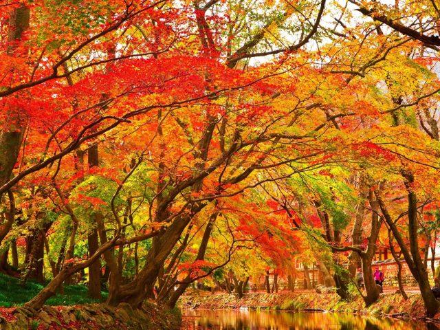 Река между красно-зелеными осенне-весенними деревьями парка природа