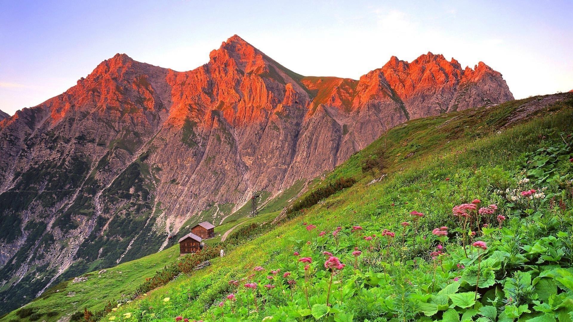 Склон цветочных растений и ландшафт Красной покрытой горной природы обои скачать