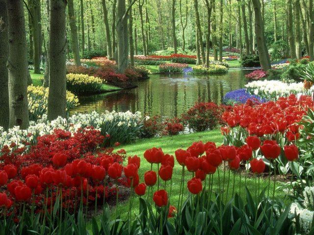 Озеро в окружении разноцветных цветов на лесной природе