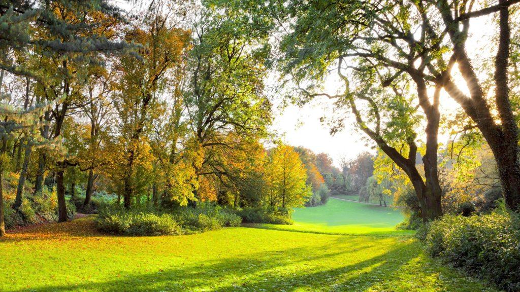 Осенние деревья парк с солнечными лучами в дневное время природа обои скачать