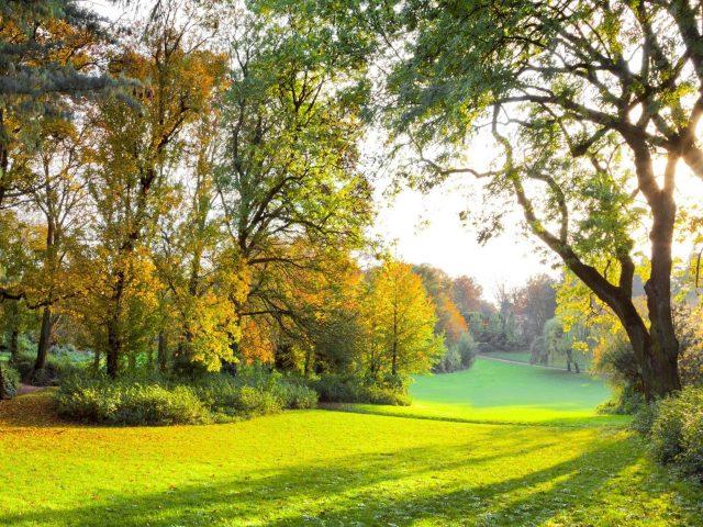 Осенние деревья парк с солнечными лучами в дневное время природа