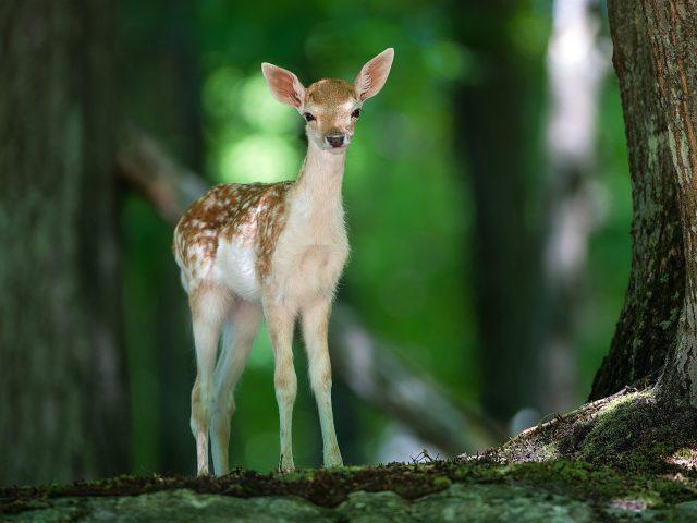Милый олененок стоит рядом с деревом оленя