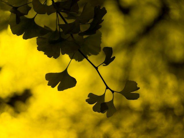 Макро,  листики,  листья,  листочки