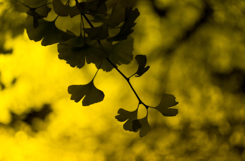 Макро, листики, листья, листочки обои скачать