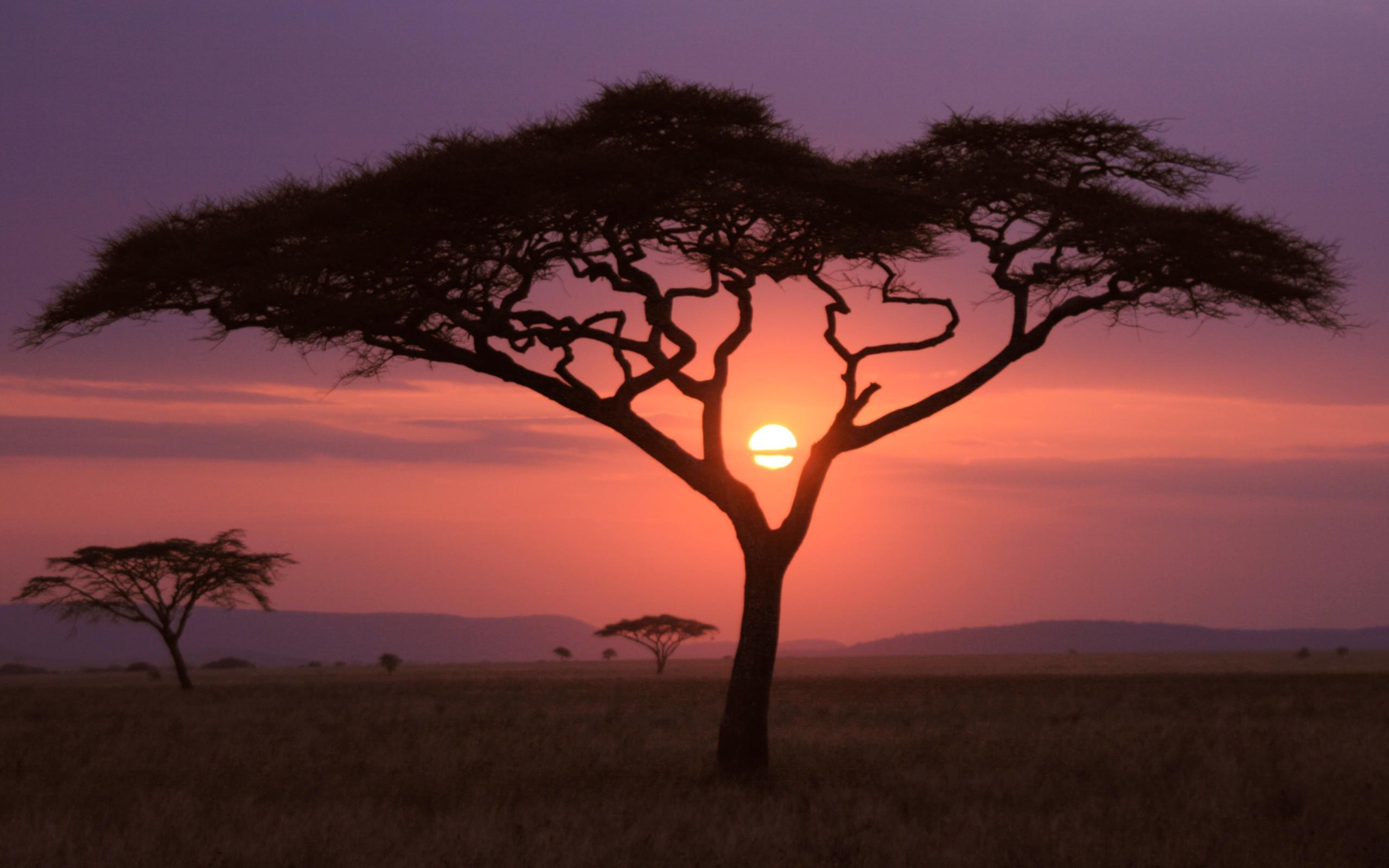 Африканский закат. обои скачать