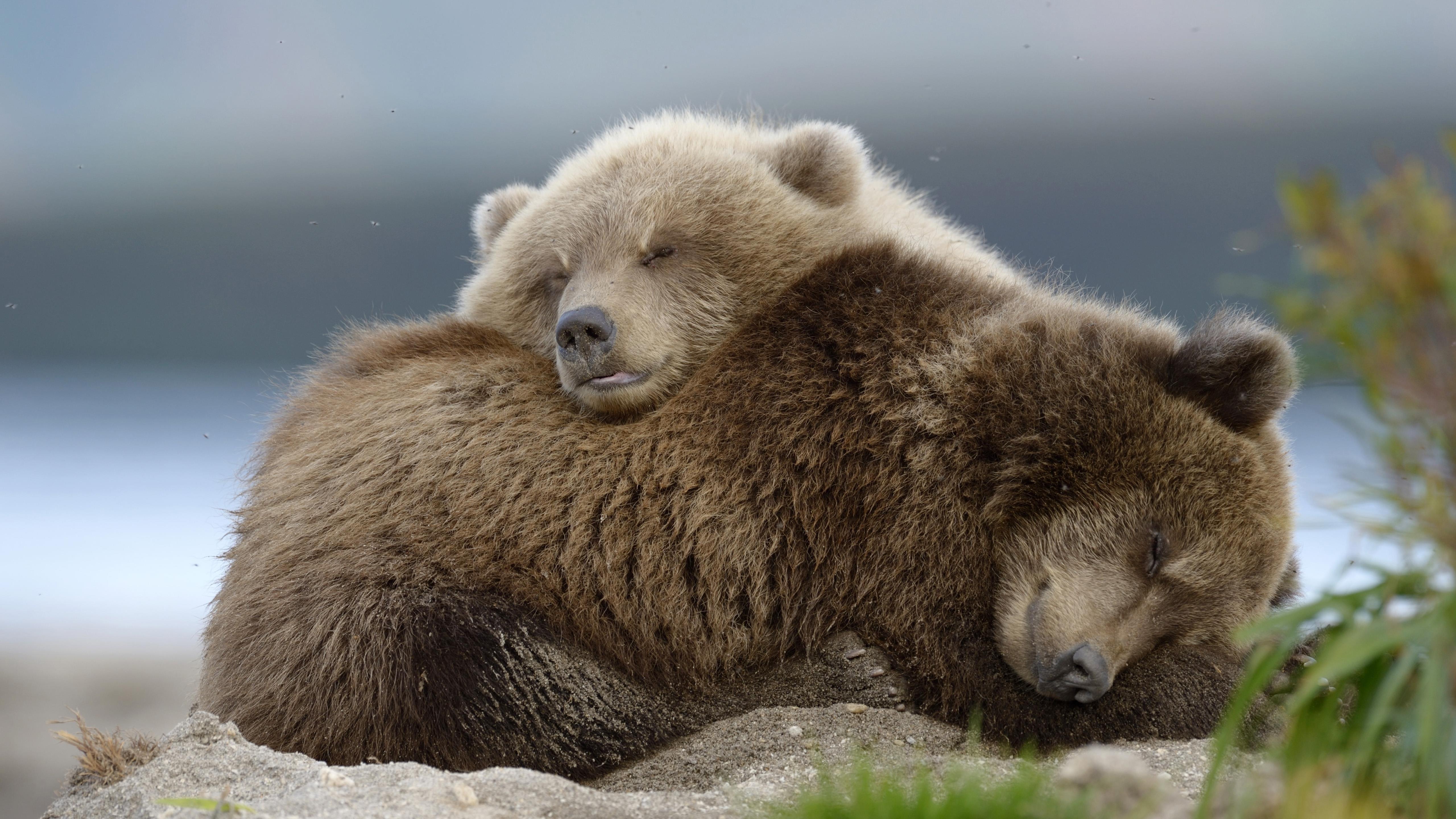 Животное медведь обои скачать
