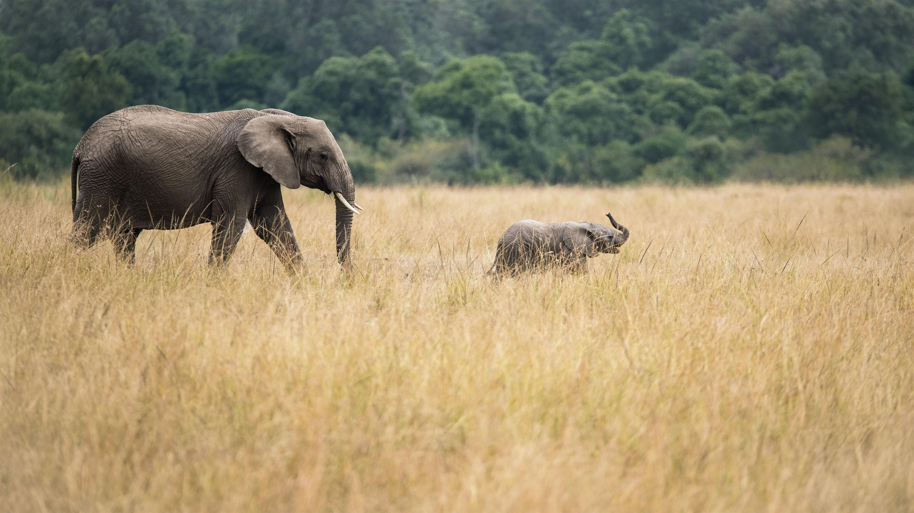 Слон с детенышами деревьев лес обои скачать