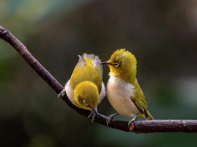 Зеленые белые птицы сидят на ветке дерева в размытом фоне животных