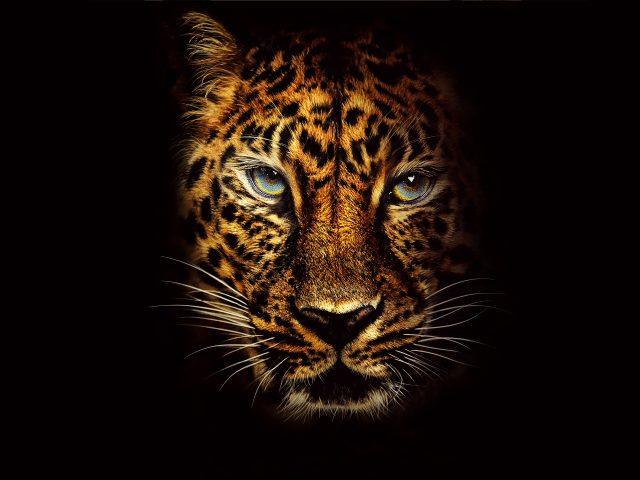 Jaguar в Джуманджи Добро пожаловать в джунгли