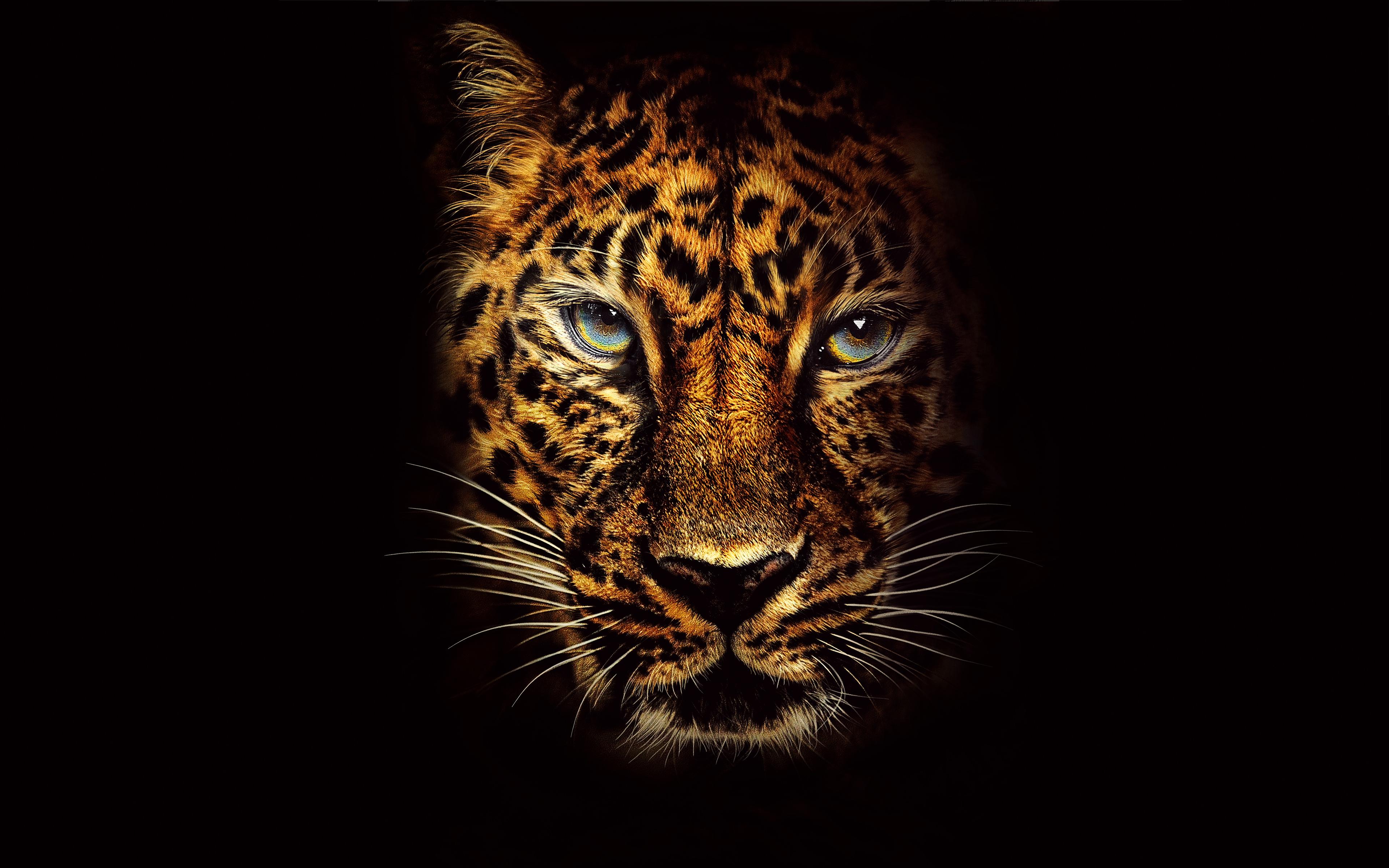 Jaguar в Джуманджи Добро пожаловать в джунгли обои скачать
