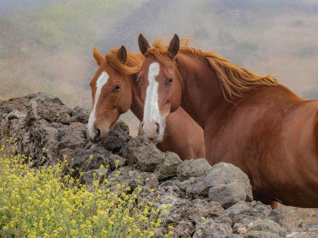 Две бурые лошади стоят возле скалы в дневное время животные