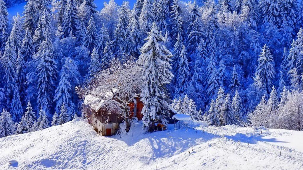 Заснеженный дом в окружении заснеженных сосен в дневное время зимы обои скачать