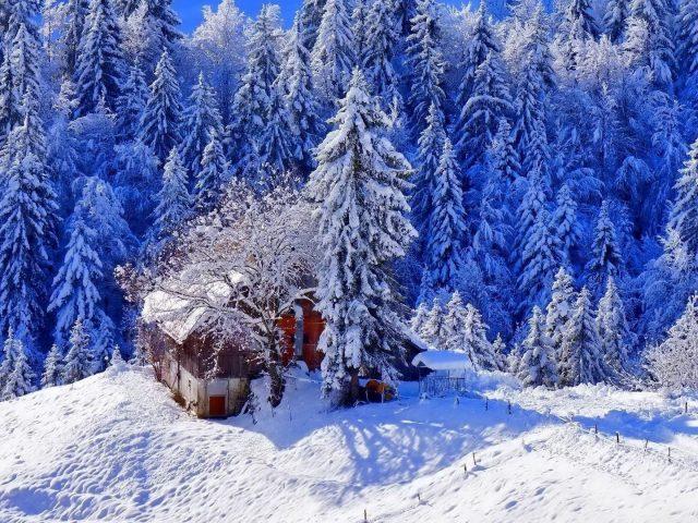 Заснеженный дом в окружении заснеженных сосен в дневное время зимы