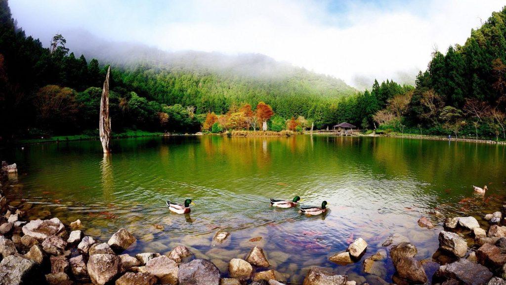 Красочный лебедь плывет по озеру в окружении зеленых деревьев под голубым небом природы обои скачать