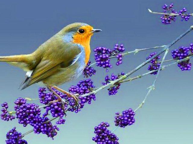 Желто коричневая птица стоит на фиолетовой ветке сливового дерева птицы
