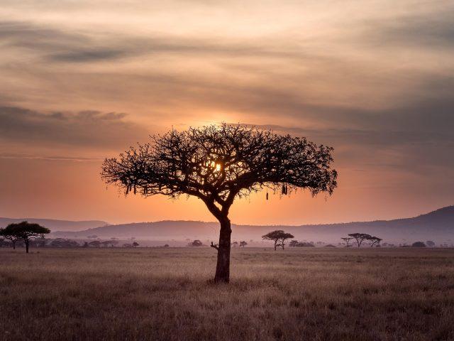 Горы небо облака дерево