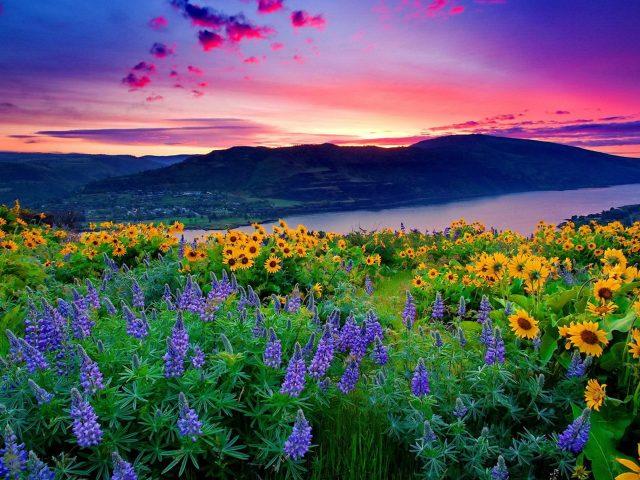 Пейзаж из желтых цветов и голубых горных озер холмы под красными облаками закат природа