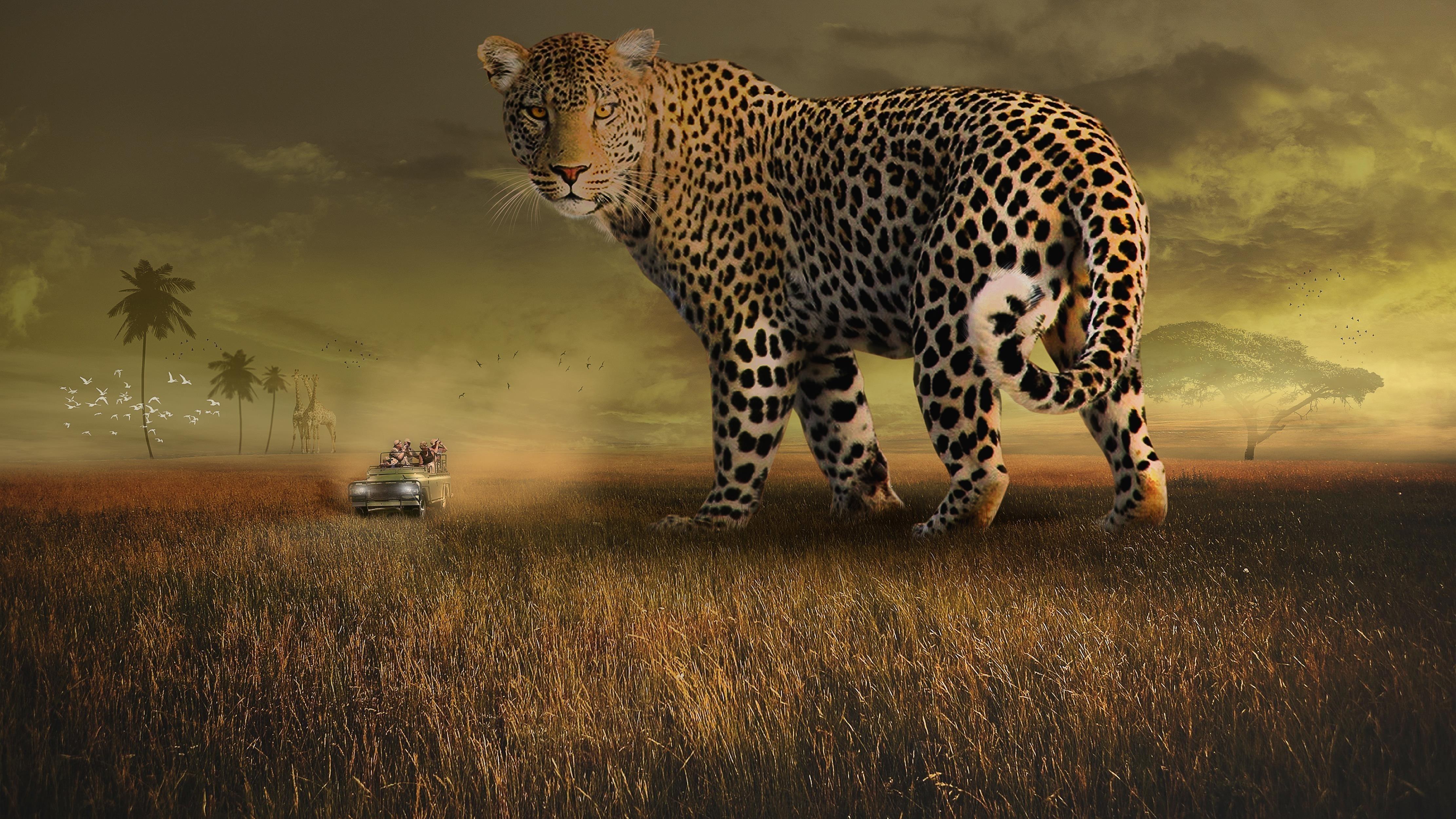 Леопард сафари обои скачать