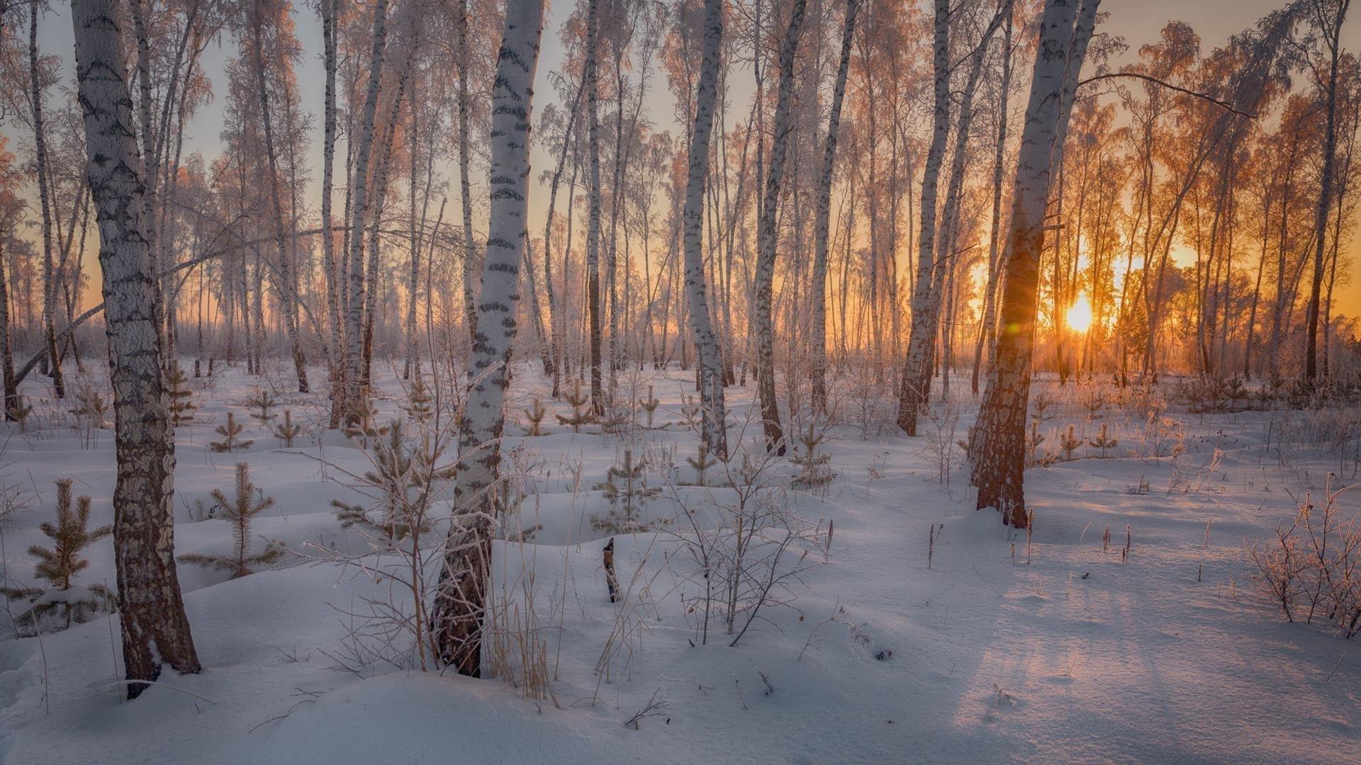 Заснеженный ствол в лесу во время заката зимы обои скачать